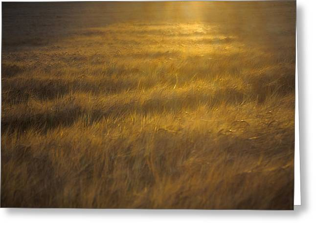 Farming Greeting Cards - Essential for growth Greeting Card by Chris Fletcher