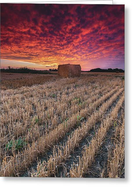Essex Hay At Sunrise Greeting Card by Cale Best