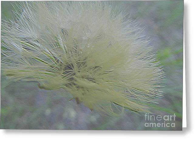 Geometric Art Greeting Cards - Etched Dandelion Greeting Card by D Hackett