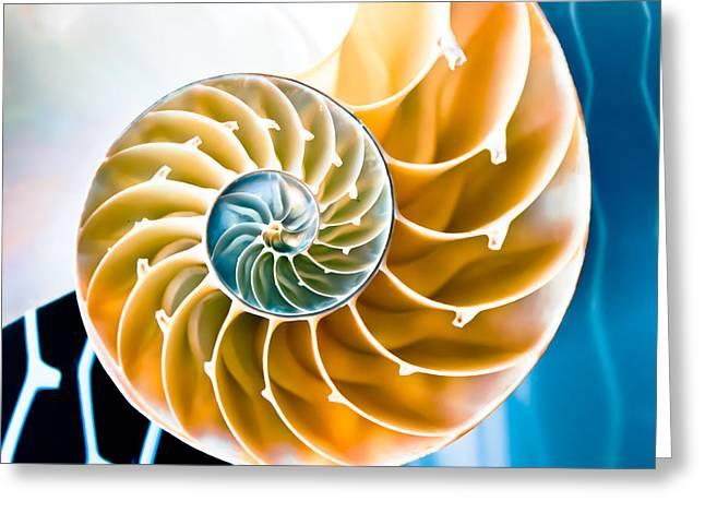 Eternal Golden Spiral Greeting Card by Colleen Kammerer