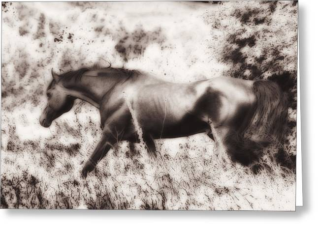 White Horses Photographs Posters Greeting Cards - Etheral Arabian Beauty Greeting Card by El Luwanaya Arabians