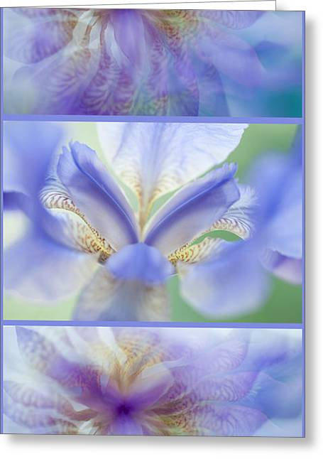 Ephemeral Greeting Cards - Ethereal Life of Iris. Vertical Triptych Greeting Card by Jenny Rainbow
