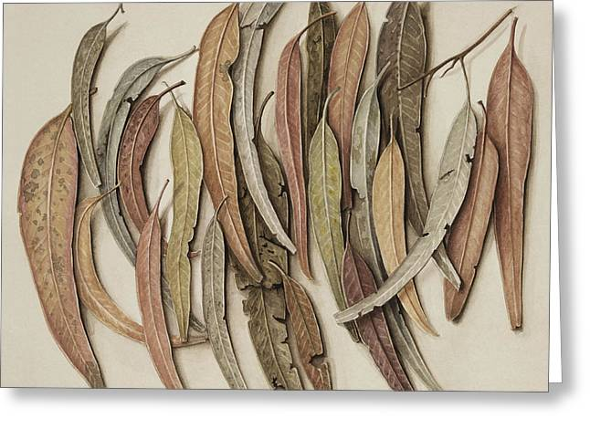 Thin Paintings Greeting Cards - Eucalyptus Leaves Greeting Card by Jenny Barron