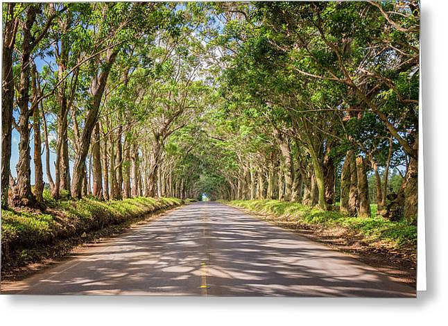 Brian Harig Greeting Cards - Eucalyptus Tree Tunnel - Kauai Hawaii Greeting Card by Brian Harig