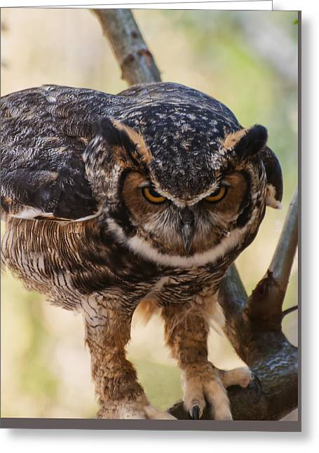 Great Birds Digital Greeting Cards - Eurasian Eagle Owl Greeting Card by Chris Flees