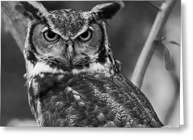 Great Birds Digital Greeting Cards - Eurasian Eagle Owl monochrome Greeting Card by Chris Flees