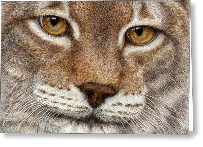 Color Pencil Greeting Cards - Eurasian Lynx Greeting Card by Pat Erickson