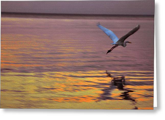 Refelctions Greeting Cards - Evening flight Greeting Card by Susanne Van Hulst