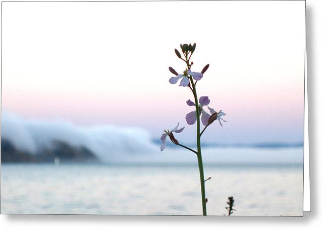 Recently Sold -  - Sabine Stetson Photographs Greeting Cards - Evening Fog rolling in Greeting Card by Sabine Stetson