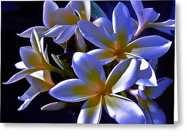 Photographs Of Flowers Greeting Cards - Evening Glow Greeting Card by Gwyn Newcombe