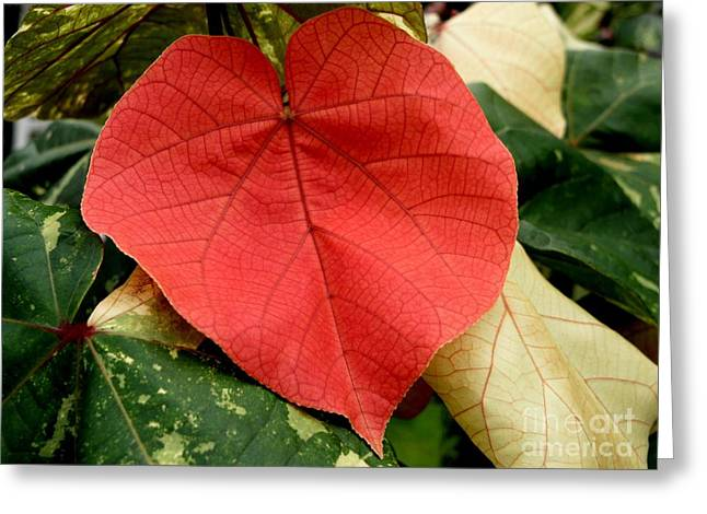 Haus Greeting Cards - Evening Hau Tree Leaves Greeting Card by Mary Deal