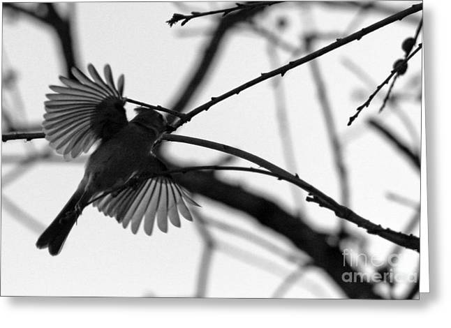 Flying Bird Greeting Cards - Evening Hunt 2 Greeting Card by Joy Tudor