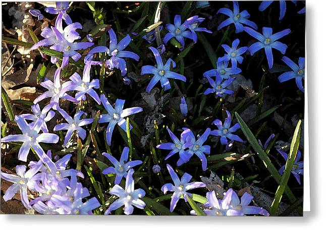 Violet Blue Greeting Cards - Evening Light Greeting Card by Jame Hayes