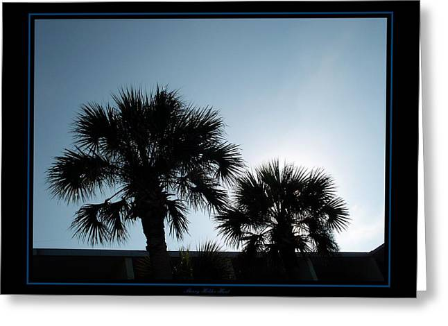 Tropical Photographs Digital Greeting Cards - Evening Palms Greeting Card by Sherry Holder Hunt