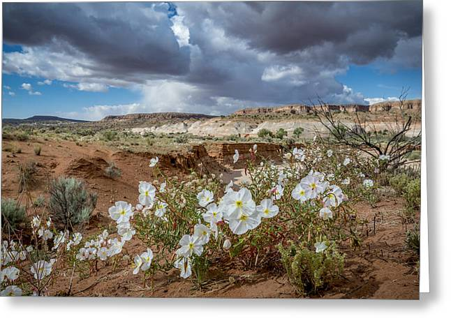 Southern Utah Greeting Cards - Evening Primrose Greeting Card by Howie Garber