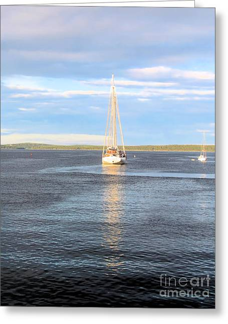 Sailboat Art Greeting Cards - Evening Sail in Frenchmans Bay Greeting Card by Elizabeth Dow