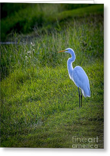 Bird On Tree Greeting Cards - Evening Search Greeting Card by Marvin Spates