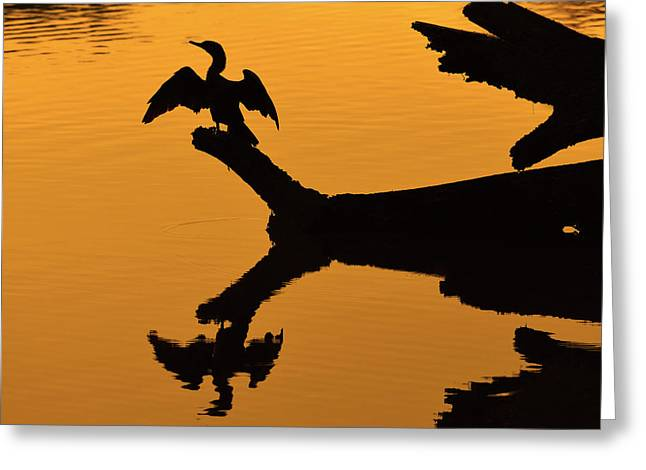 Neotropics Greeting Cards - Evening Spread Greeting Card by Tony Beck