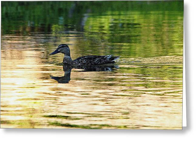 Spreed Greeting Cards - Evening Swim Greeting Card by Debbie Oppermann