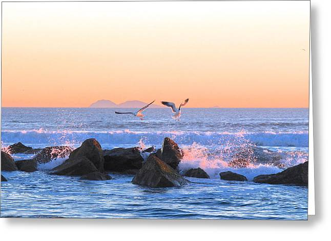 Flying Seagull Greeting Cards - Eventide Greeting Card by Joy  Buckels