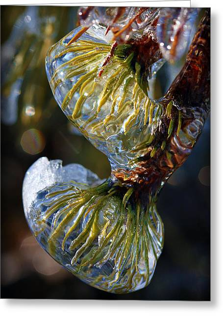 Pine Needles Greeting Cards - Ever Frozen Green Greeting Card by Susie Weaver