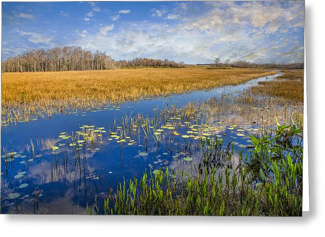 Reflection In Water Greeting Cards - Everglades Blues Greeting Card by Debra and Dave Vanderlaan