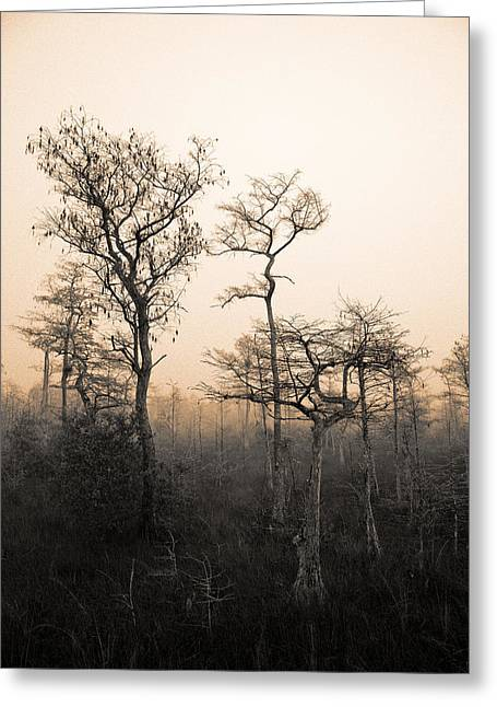 Everglades Cypress Stand Greeting Card by Gary Dean Mercer Clark