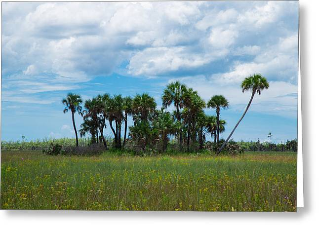 Field. Cloud Greeting Cards - Everglades Landscape Greeting Card by Christopher Lance