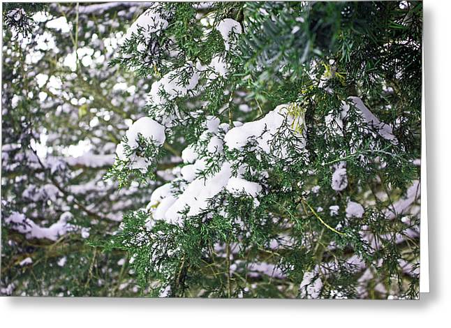 Snowmageddon Greeting Cards - Evergreen Greeting Card by Angela Siener