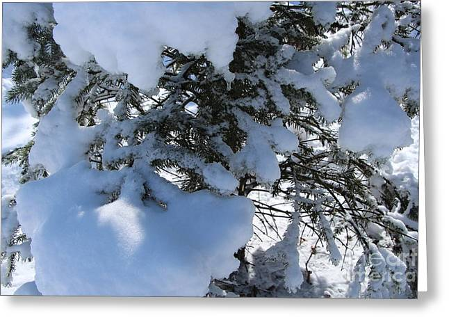 Wintry Greeting Cards - Evergreen Wintertime Greeting Card by Jari Hawk