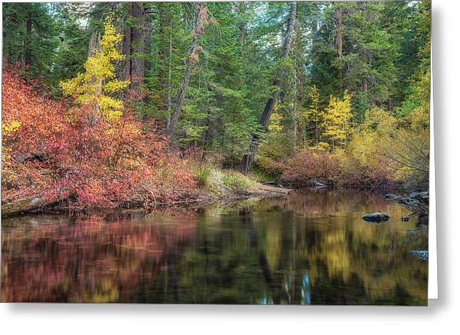 Fall Grass Greeting Cards - Everlasting Greeting Card by Jonathan Nguyen