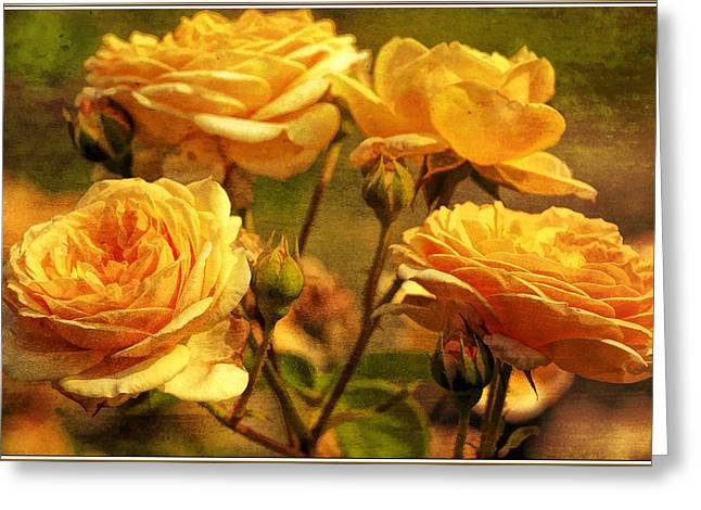 Paint Photograph Greeting Cards - Every rose has its thorn Greeting Card by Geraldine Scull