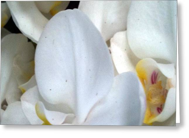 Everybody Loves My Orchid Field Greeting Card by Fania Simon