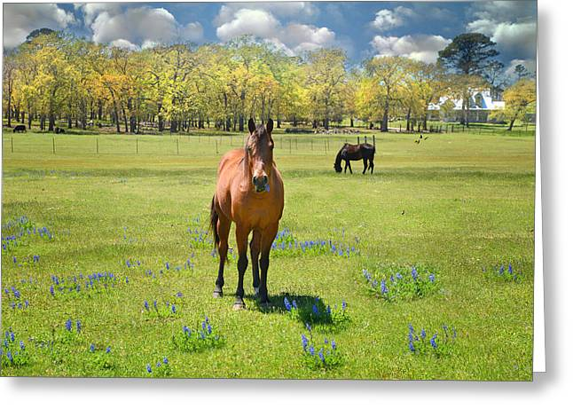 Everything's Better With Bluebonnets Greeting Card by Lynn Bauer