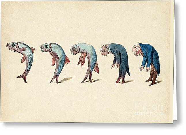 Evolution Of Fish Into Old Man, C. 1870 Greeting Card by Wellcome Images
