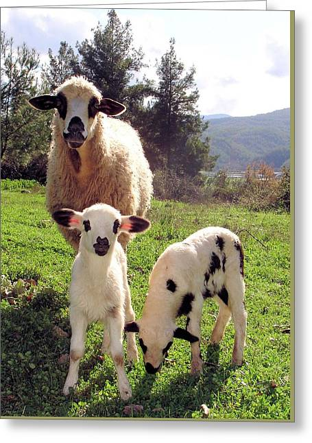 Naivety Greeting Cards - Ewe and Twin Spring Lambs Greeting Card by Tracey Harrington-Simpson