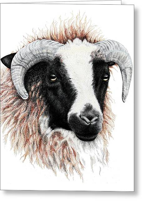 Nose Drawings Greeting Cards - Ewe Greeting Card by Sandra Moore