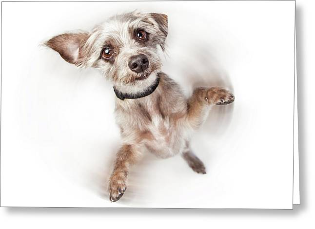 Excited Dog Spinning With Motion Blur Greeting Card by Susan Schmitz