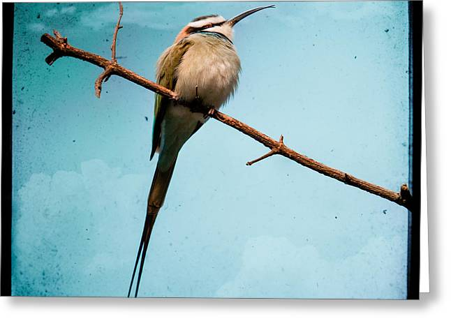 Bird Photographs Greeting Cards - Exotic birds - White throated bee eater Greeting Card by Gary Heller