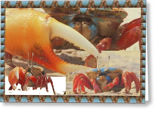 Babylon Mixed Media Greeting Cards - Exotic Crabs wild varieties unique mating and crecreation styles grand sizes building tunnels in sta Greeting Card by Navin Joshi