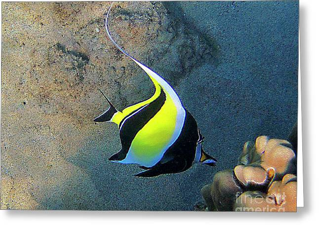 Reef Fish Photographs Greeting Cards - Exotic Reef Fish  Greeting Card by Bette Phelan