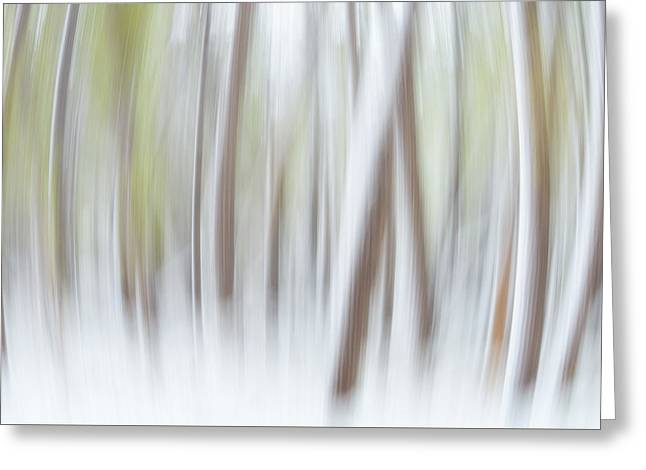 Darren Greeting Cards - Expanding Forest Greeting Card by Darren  White