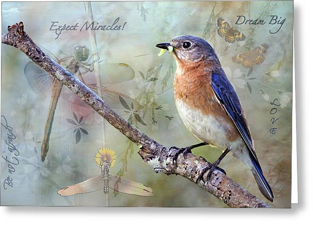 Eastern Bluebird Greeting Cards - Expect Miracles Greeting Card by Bonnie Barry