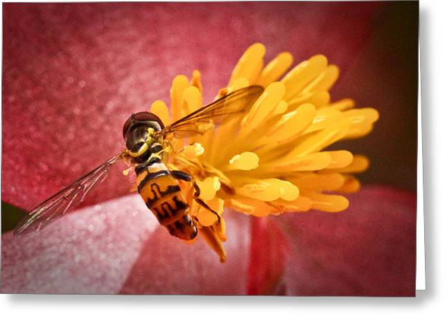 Macro Finalized Photographs Greeting Cards - Exploring a Flower Greeting Card by Ryan Kelly