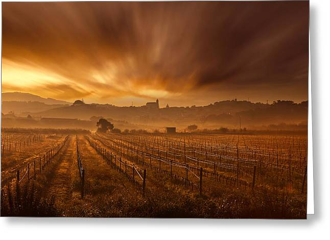 Vineyard Landscape Greeting Cards - Explosion Greeting Card by Jorge Maia