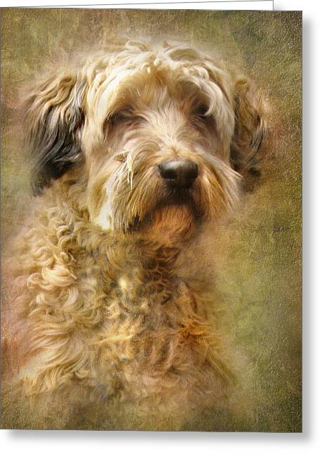 Collie Greeting Cards - Expression Greeting Card by Trudi Simmonds