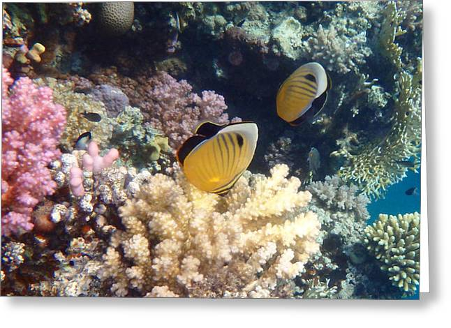 Decorative Fish Greeting Cards - Exquisite Butterflyfish in the Red Sea Greeting Card by Johanna Hurmerinta