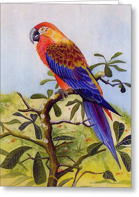 Extinct Greeting Cards - Extinct Birds The Macaw or Parrot Greeting Card by Debbie McIntyre