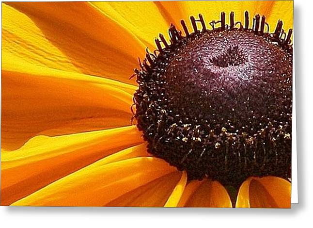 Galt Greeting Cards - Eye Catcher Greeting Card by Bruce Bley