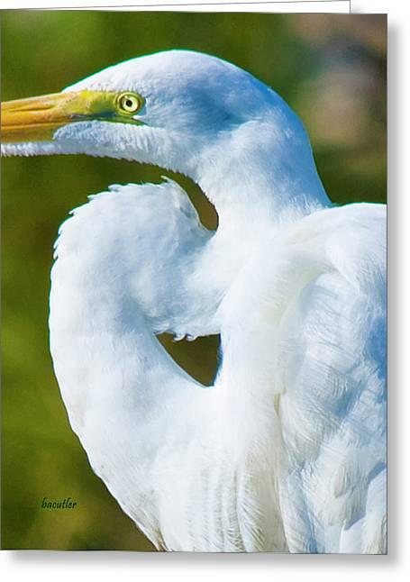 Eye-catching Greeting Card by Betsy C Knapp